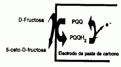 BIOSENSOR PARA LA MEDIDA DE FRUCTOSA, MANERA DE PREPARARLO Y SU APLICACION AL ANALISIS DE FRUCTOSA EN PRODUCTOS ALIMENTICIOS.