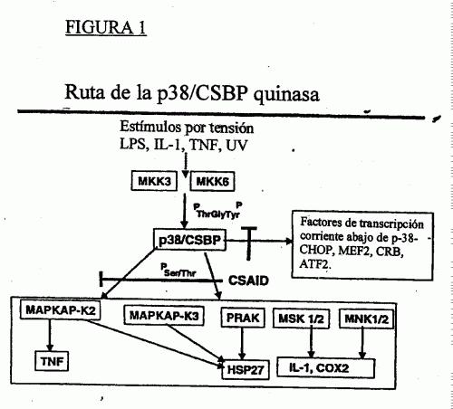 COMPUESTOS 3,4-DIHIDRO-(1H)QUINAZOLIN-2-ONA COMO INHIBIDORES DE CSBP/P38 QUINASA.