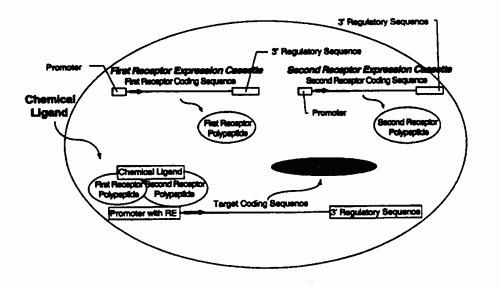 CONTROL DE LA EXPRESION GENICA EN PLANTAS POR TRANSACTIVACION MEDIADA POR UN RECEPTOR EN PRESENCIA DE UN LIGANDO QUIMICO.