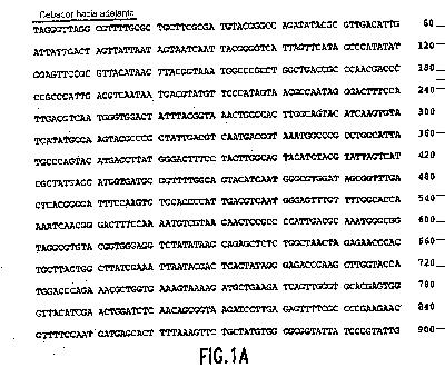 ENSAYO DE NEUTRALIZACION USANDO PARTICULAS SIMILARES AL VIRUS DE PAPILOMAVIRUS HUMANO.