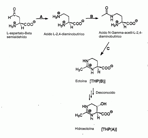 GEN DE TETRAHIDROPIRIMIDINA-DIOXIGENASA , POLIPEPTIDOS CODIFICADOS POR ESTE GEN Y METODO PARA PREPARARLOS.