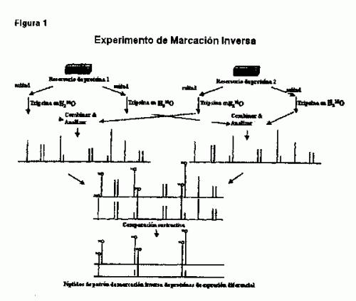 METODO DE MARCACION INVERSA PARA LA IDENTIFICACION RAPIDA DE PROTEINAS MARCADORAS/OBJETIVO.