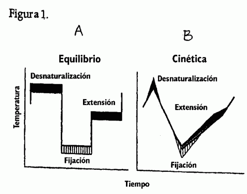 MONITORIZACION DE LA HIBRIDACION DURANTE LA PCR.