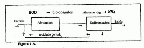 PROCEDIMIENTO QUE UTILIZA AGUA CON FUERTE CONTENIDO EN AMONIACO PARA LA SELECCION Y EL ENRIQUECIMIENTO DE MICRO-ORGANISMOS NITRIFICANTES DESTINADOS A LA NITRIFICACION DE LAS AGUAS RESIDUALES.