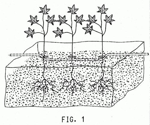 Sustratos de cultivo de plantas con membrana hidrofilica y - Humedad relativa espana ...