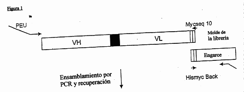 MEJORAS EN LA VISUALIZACION DEL RIBOSOMA.