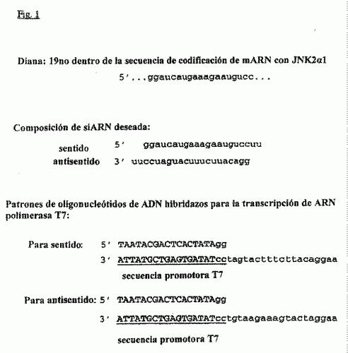 METODO PARA LA SINTESIS IN VITRO DE ARNS CORTOS DE DOBLE CADENA.