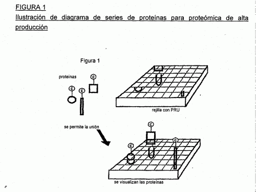 PROCEDIMIENTO DE ANALISIS DE PROTEINAS.