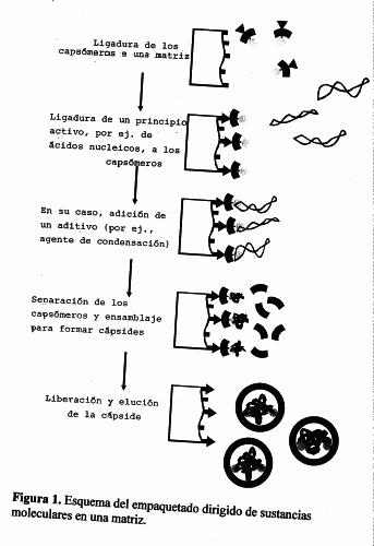 PROCEDIMIENTO Y ENCAPSULADO DIRECTO DE SUSTANCIAS MOLECULARES EN ENVOLTURAS PROTEICAS.