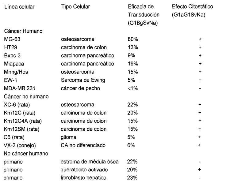 EXPRESION DE CICLINA G1 EN TUMORES.
