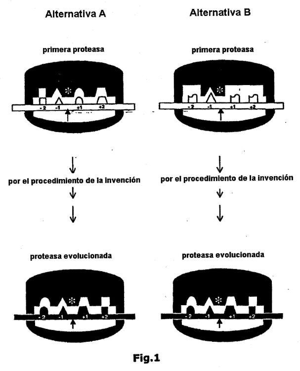 PROCEDIMIENTO PARA GENERAR PROTEASAS ESPECIFICAS DE SECUENCIA MEDIANTE EVOLUCION DIRIGIDA.