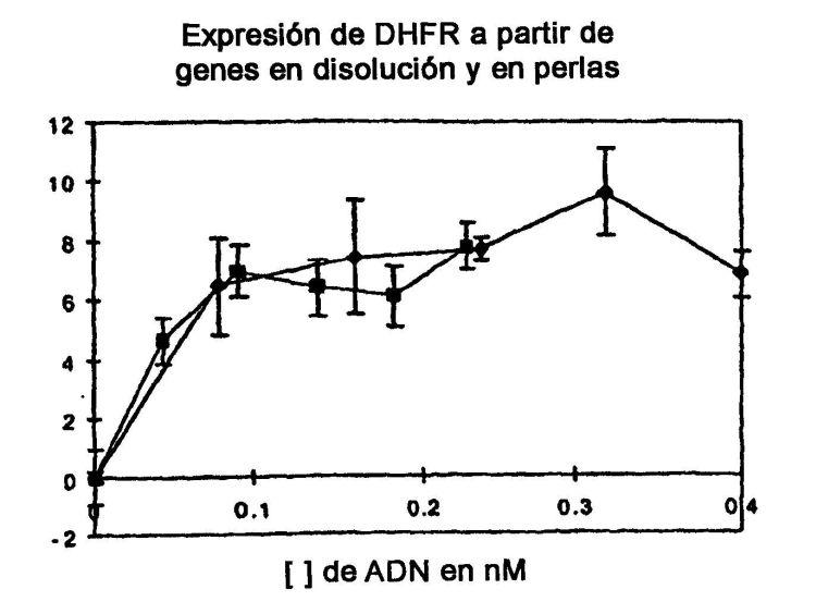 PROCEDIMIENTO DE CLASIFICACION OPTICA.