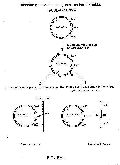 celula procariota y eucariota. EN UNA CELULA PROCARIOTA O