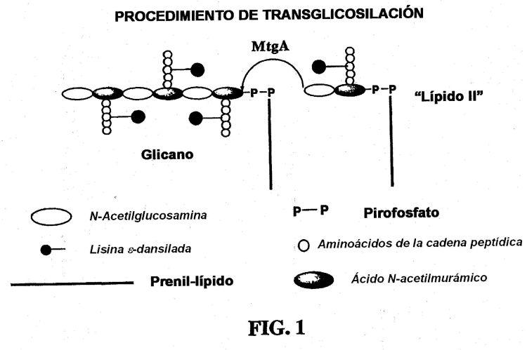 PROCEDIMIENTO PARA PREPARAR LIPIDO II.