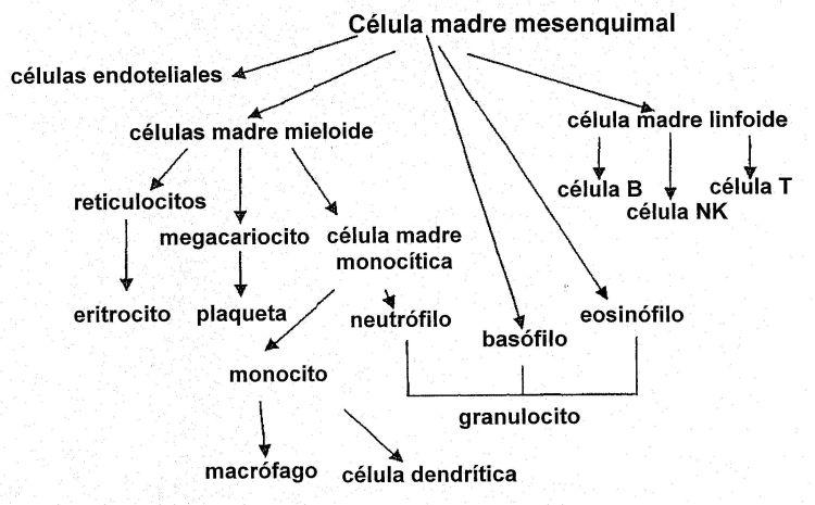 PRODUCTOS SANGUINEOS PROCEDENTES DE CELULAS MADRE MESENQUIMALES.