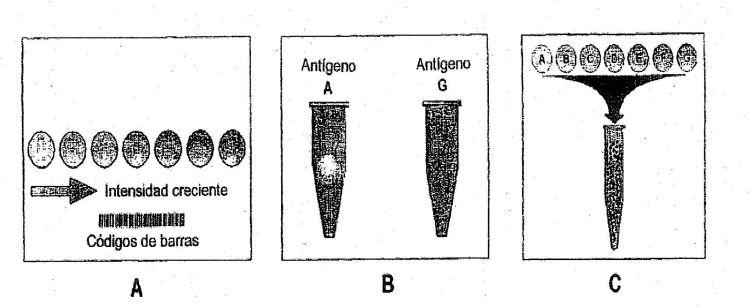 SISTEMA DE TEST DIAGNOSTICO PARA LA DETECCION DE ANTICUERPOS CONTRA INFECCIONES RESPIRATORIAS AGUDAS Y NEUMONIAS ATIPICAS.
