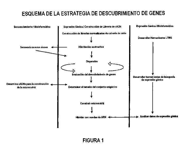 HIBRIDACION SUSTRACTIVA BASADA EN MICROMATRICES.