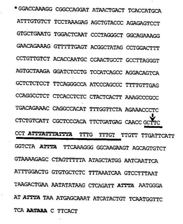 LINEAS CELULARES TRANSFECTADAS DE MANERA ESTABLE, UTILIZABLE PARA LA IDENTIFICACION DE LOS COMPONENTES QUE AFECTAN LA ESTABILIDAD DEL MRNA.