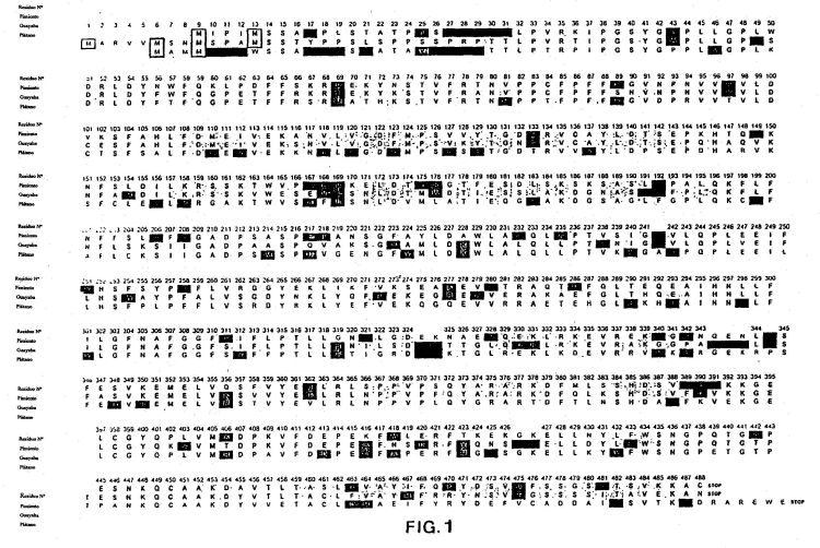 13-HIDROPEROXIDO LIASA DE GUAYABA (PSIDIUM GUAJAVA) Y USOS DE LA MISMA.