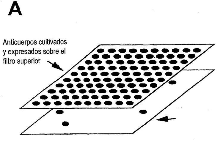 PROCEDIMIENTO DE SELECCION DIRECTA.