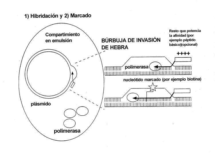 CST (AUTOMARCADO COMPARTIMENTALIZADO).