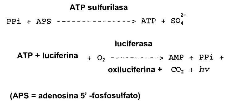 METODO DE SECUENCIACION DE ADN.