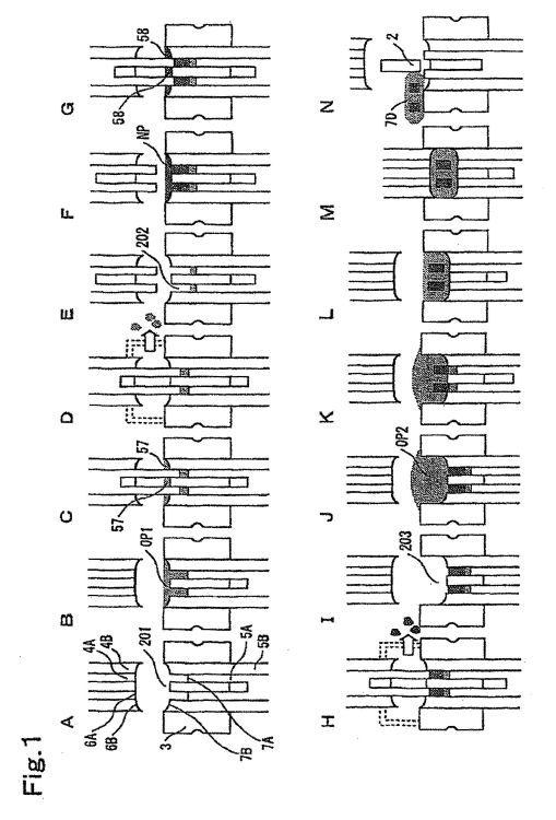 METODO DE FABRICACION DE UN ARTICULO MOLDEADO DE MULTIPLES NUCLEOS Y DISPOSITIVO DE FABRICACION DEL MISMO.