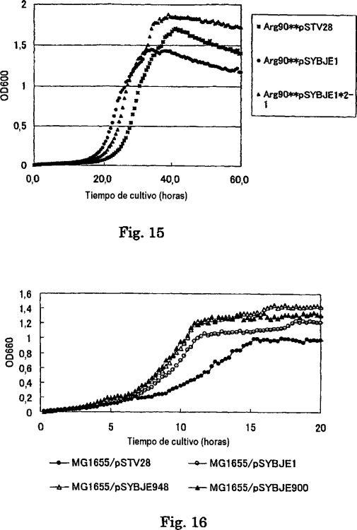 MICROORGANISMO QUE PRODUCE L-AMINOACIDOS Y PROCEDIMIENTO PARA PRODUCIR L-AMINOACIDOS.