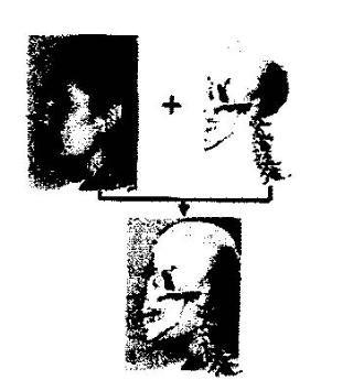 Sistema de identificación forense por superposicion craneofacial basado en soft computing.