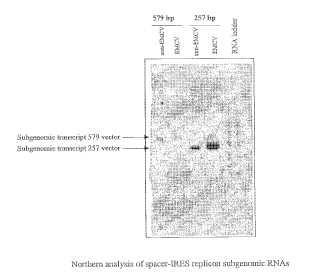 Replicones de alfavirus mejorados y constructos cooperadores.