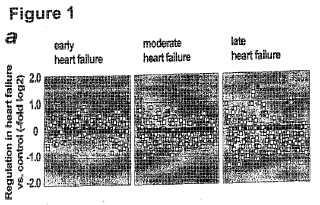Objetivos de microácido ribonucleico (miARN) y en dirección 3'' para propósitos de diagnóstico y terapéuticos.