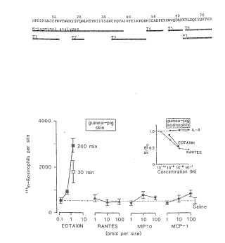 Eotaxina = citocina quimiotáctica de eosinófilos.