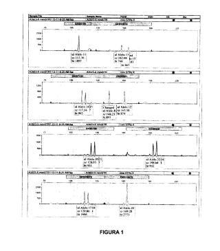 Método para la obtención del perfil genético de un individuo mediante el análisis de loci de cromosoma x.