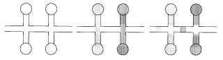 Procedimiento de introducción de una pluralidad de disoluciones en un canal microfluídico.