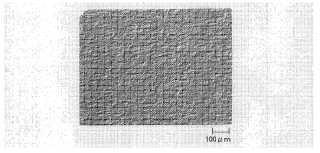 Película de polipropileno orientada biaxialmente.