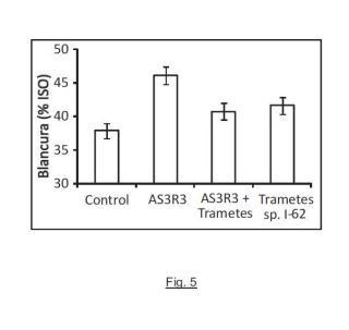 Cepa de hongo Hormonema sp. CECT 13092 y procedimiento de aplicación para la deslignificación de biomasa lignocelulósica.