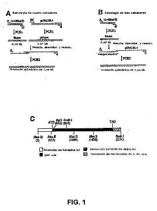 Producción de proteínas en semillas de plantas.