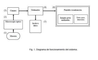 Procedimiento de visión artificial para la detección de gotas citoplasmáticas proximales en espermatozoides.
