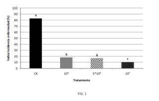 Composición para el control biológico del oídio en cultivos vegetales a base de una cepa de Ampelomyces.