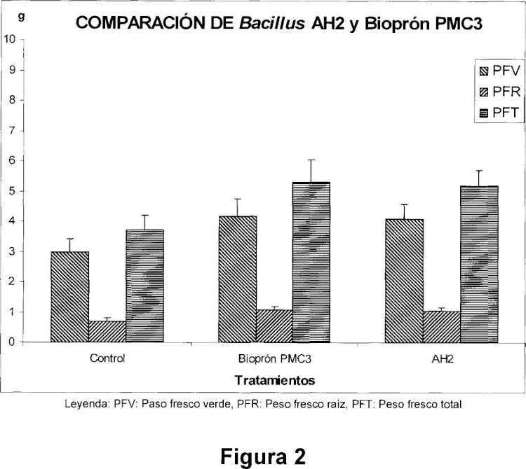 Un cultivo puro de la cepa AH2 de la especie Bacillus Velezensis y producto para el control biológico de hongos fitopatógenos.