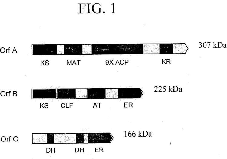 Sistemas de policétido sintasa de AGPI y usos de los mismos.