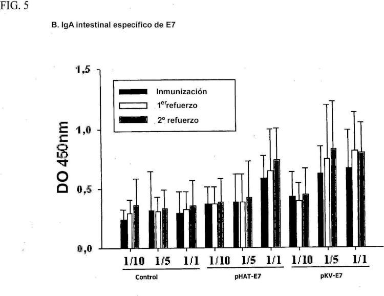 Vector de alta expresión constitutivamente estable para preparar vacuna contra el VPH y bacterias de ácido láctico recombinante transformadas de ese modo.