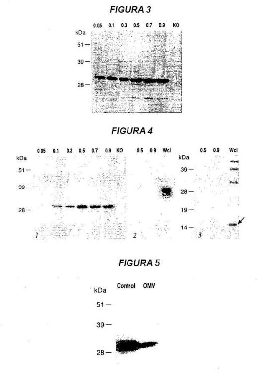 Variantes múltiples de proteína NMB 1870 de meningococo.