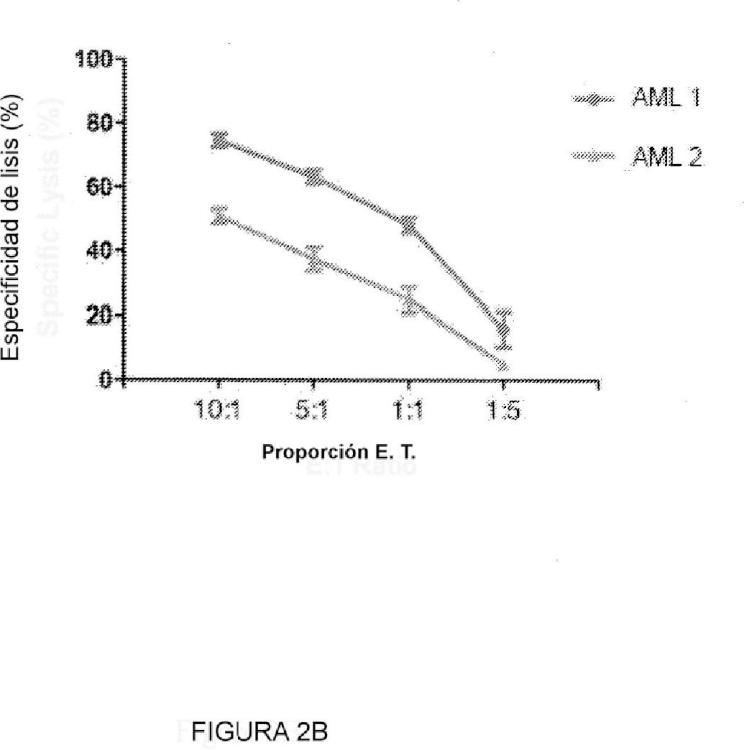 Anticuerpos dirigidos contra la cadena alfa del receptor de la interleucina 3.