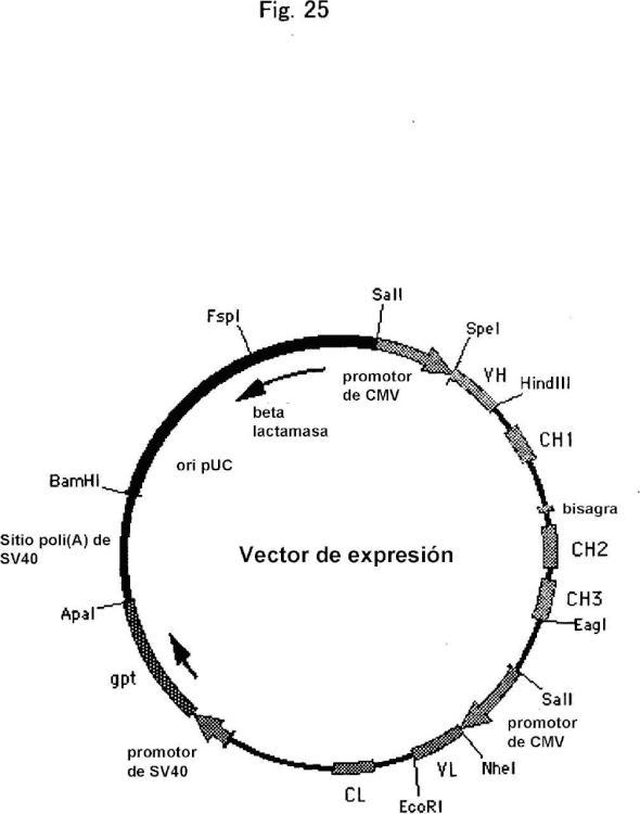 Anticuerpo anti-DLK-1 humana que muestra la actividad antitumoral in vivo.