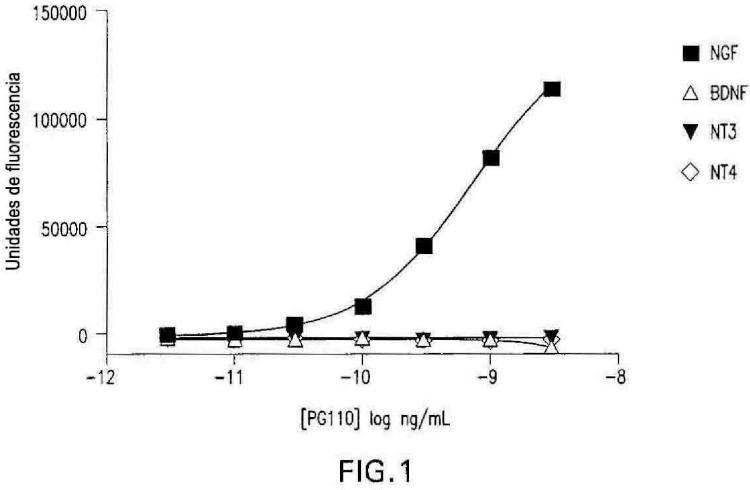 Anticuerpos contra el factor de crecimiento nervioso (NGF) con estabilidad in vivo mejorada.