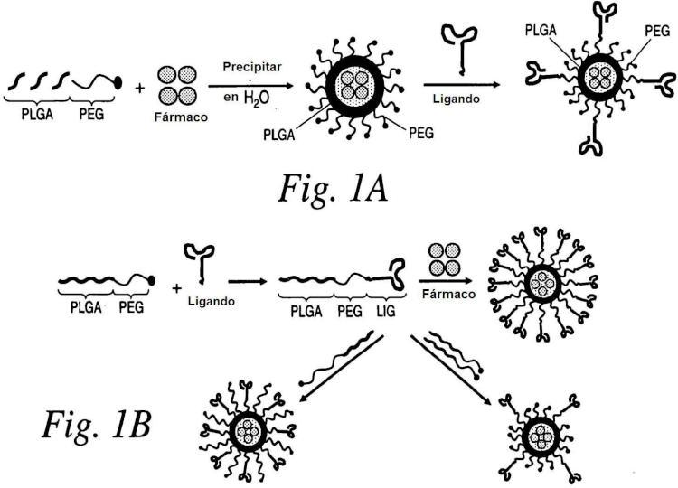 Direccionamiento a células de cáncer usando nanopartículas.