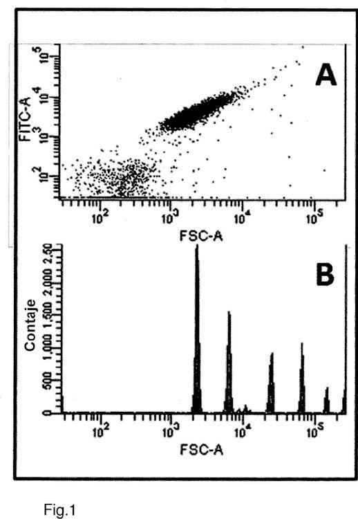 Procedimiento para detectar anticuerpos Aß-específicos en una muestra biológica.