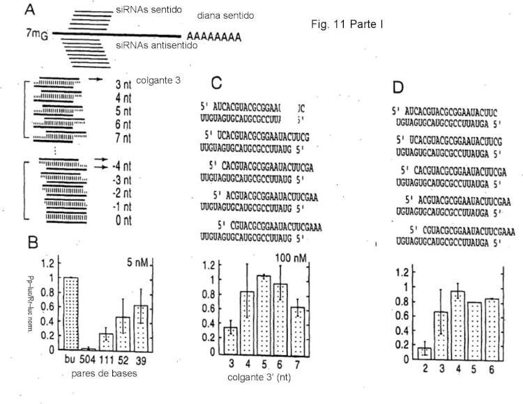 Interferencia de RNA mediadora de moléculas pequeñas de RNA.