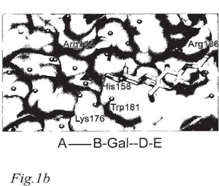 Nuevos inhibidores de galectinas a base de 3-triazolil-galactósido.